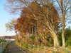 f:id:honda-jimusyo:20101205150556j:plain