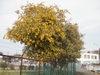 f:id:honda-jimusyo:20110402101358j:plain