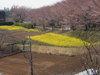 f:id:honda-jimusyo:20110406131551j:plain
