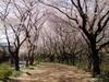 f:id:honda-jimusyo:20110413085343j:plain