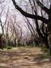 f:id:honda-jimusyo:20110413085458j:plain
