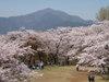 f:id:honda-jimusyo:20110413132924j:plain