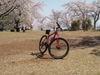 f:id:honda-jimusyo:20110413133640j:plain