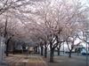 f:id:honda-jimusyo:20110413165204j:plain