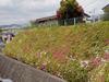 f:id:honda-jimusyo:20110429114454j:plain