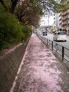 f:id:honda-jimusyo:20110501121537j:plain