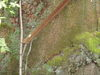 f:id:honda-jimusyo:20110502083538j:plain