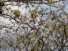 f:id:honda-jimusyo:20110502094827j:plain