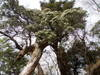 f:id:honda-jimusyo:20110502095136j:plain
