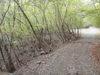 f:id:honda-jimusyo:20110502165830j:plain