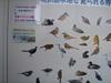 f:id:honda-jimusyo:20110508084536j:plain
