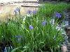 f:id:honda-jimusyo:20110508110850j:plain