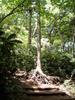 f:id:honda-jimusyo:20110514103903j:plain