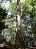 f:id:honda-jimusyo:20110514103953j:plain