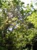 f:id:honda-jimusyo:20110514121247j:plain