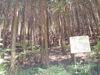 f:id:honda-jimusyo:20110514121507j:plain