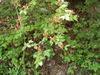 f:id:honda-jimusyo:20110514121752j:plain
