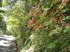 f:id:honda-jimusyo:20110514121809j:plain