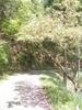 f:id:honda-jimusyo:20110514123429j:plain