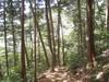 f:id:honda-jimusyo:20110514132109j:plain