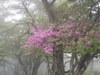 f:id:honda-jimusyo:20110619115047j:plain