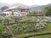 f:id:honda-jimusyo:20110629153238j:plain