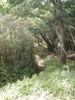 f:id:honda-jimusyo:20110723103351j:plain