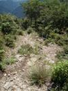 f:id:honda-jimusyo:20110723124452j:plain