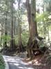 f:id:honda-jimusyo:20110806102723j:plain