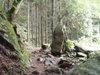 f:id:honda-jimusyo:20110806125635j:plain