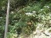 f:id:honda-jimusyo:20110807105128j:plain