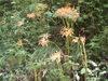 f:id:honda-jimusyo:20110807105139j:plain