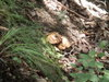 f:id:honda-jimusyo:20110807113705j:plain