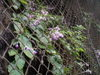 f:id:honda-jimusyo:20110824110708j:plain