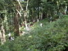 f:id:honda-jimusyo:20110824123439j:plain