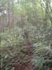 f:id:honda-jimusyo:20110824140810j:plain