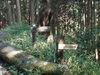 f:id:honda-jimusyo:20110824153300j:plain