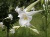 f:id:honda-jimusyo:20110826090506j:plain