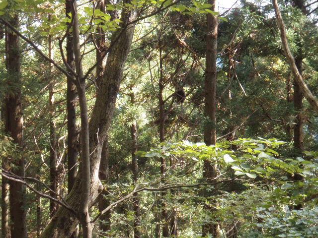 f:id:honda-jimusyo:20121020131453j:plain
