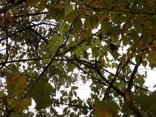 f:id:honda-jimusyo:20121111122134j:plain