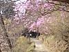 f:id:honda-jimusyo:20200920203040j:plain