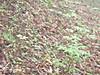 f:id:honda-jimusyo:20200921183614j:plain