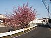 f:id:honda-jimusyo:20200922071624j:plain