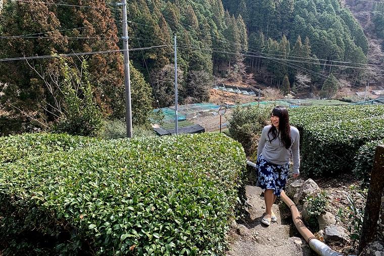 奥静岡の縁側カフェと茶畑