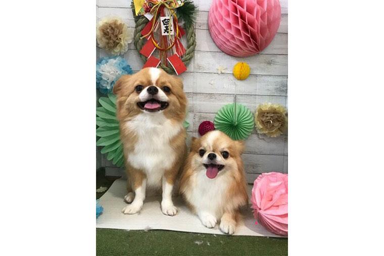 大津選手の愛犬チワワ