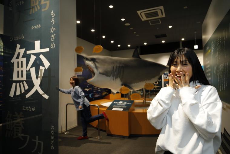 日本で唯一のサメの博物館「シャークミュージアム」