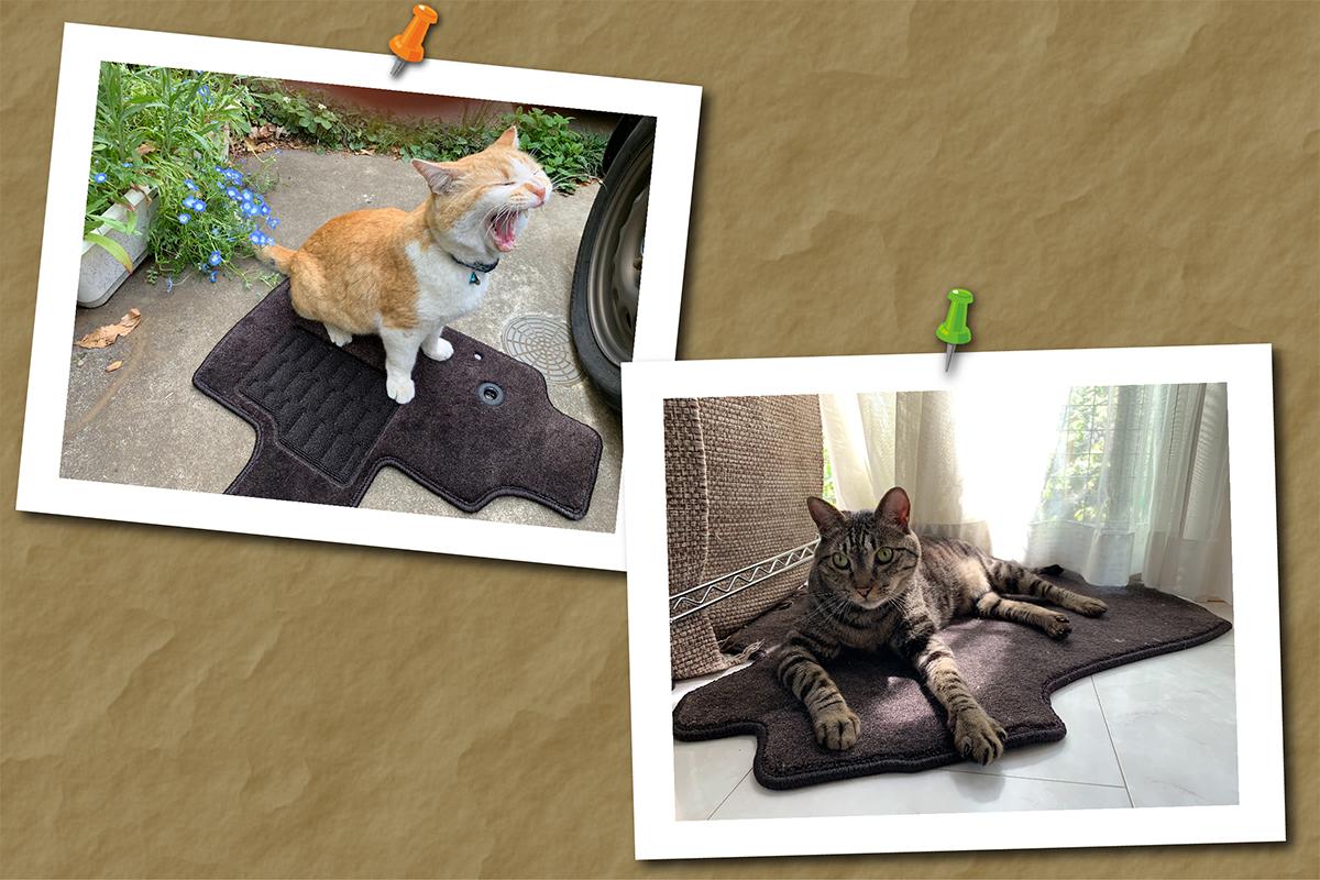 フロアマットが大好きな猫