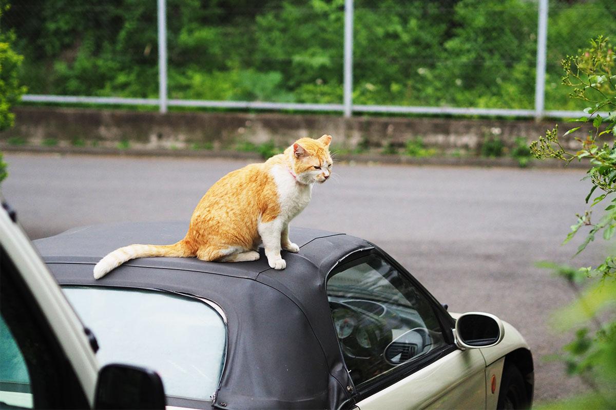 Honda「ビート」の幌の上に乗る猫ちゃん