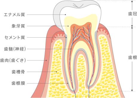 f:id:honey-dental:20200426201037p:plain