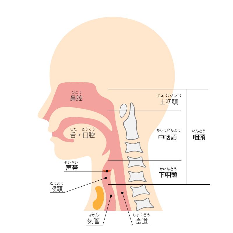 f:id:honey-dental:20200503174934j:plain